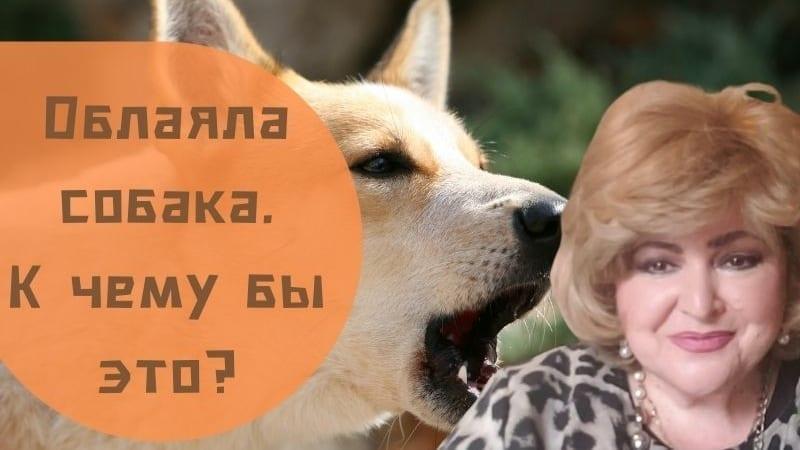 Облаяла собака. К чему бы это?   Бабушка Соня рассказывает