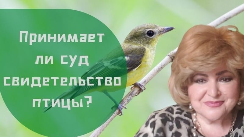 Принимается ли судом свидетельство птицы? | Бабушка Соня рассказывает