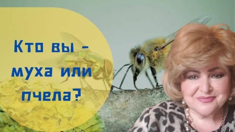 🐝 Бабушка Соня рассказывает | Кто вы – муха или пчела?