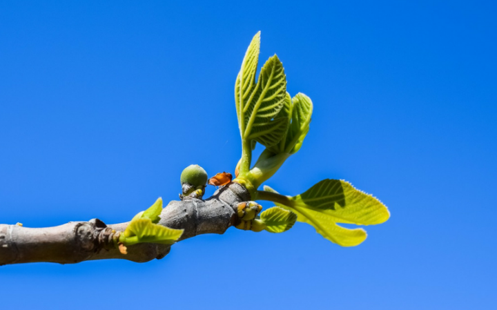 Не руби плодовое дерево…