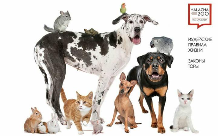 Шаббат для владельцев домашних животных