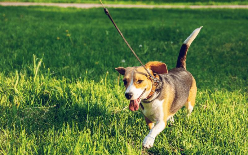 Законы Шабата | Животные в Шабат. Урок 1