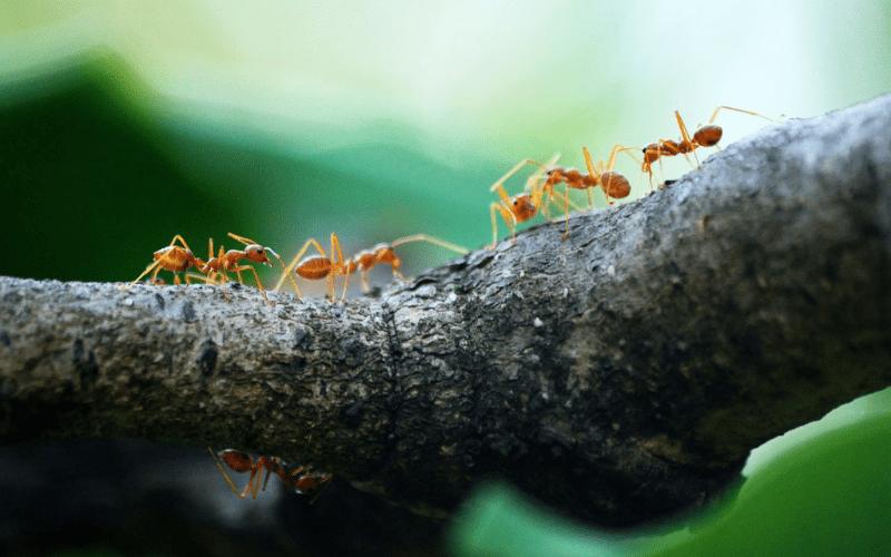 Законы Шабата | Животные в Шабат. Урок 4
