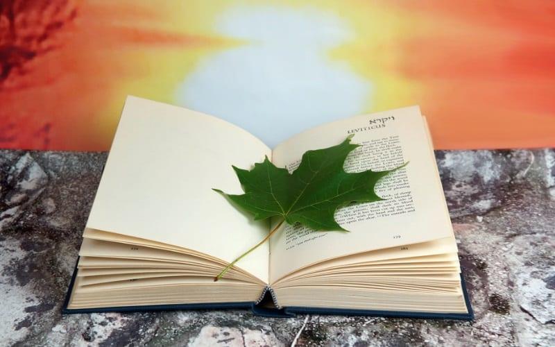 Глава Ваехи | Размышления на тему Недельных Глав Торы