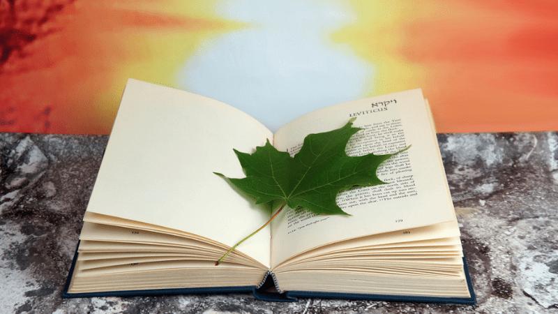 Глава Ваешев | Размышления на тему Недельных Глав Торы