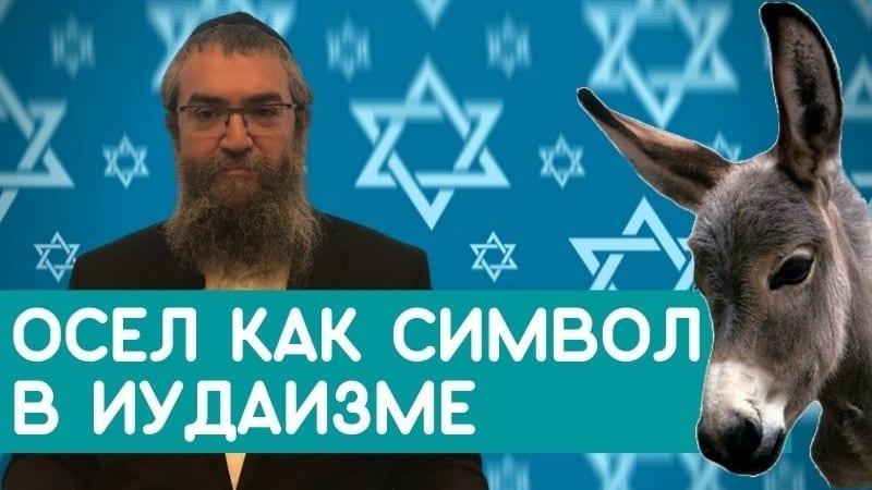 Осел как символ в иудаизме. Авраам авину, Моше, Мошиах — что их объединяет?