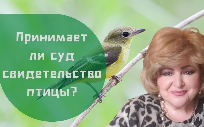 Принимается ли судом свидетельство птицы?   Бабушка Соня рассказывает