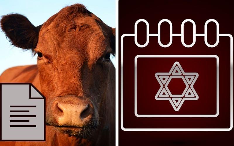 Тайна еврейского года Красная корова